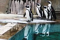 Ústecká zoo. Ilustrační foto.