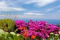 Záběry z Madeiry.