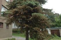 Nemocný strom na Skřivánku.