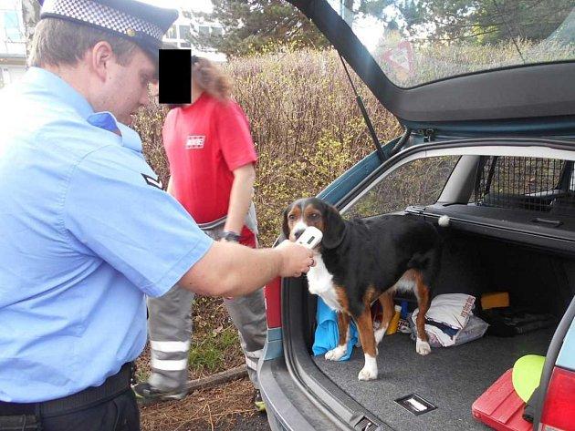 Strážníci kontrolovali povinné označení psů.