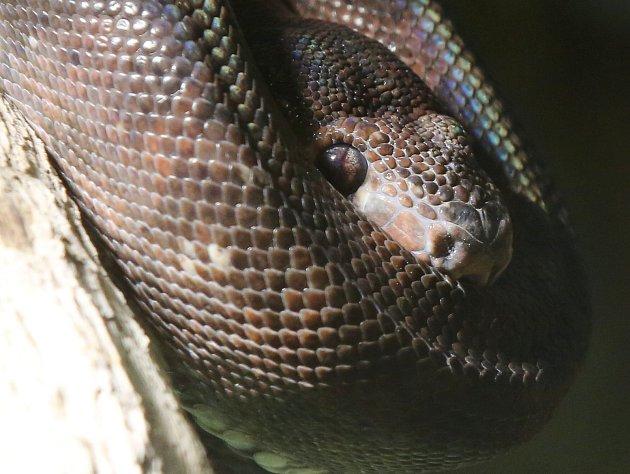 Ústecká zoo otevřela tři nová biotopová terária.