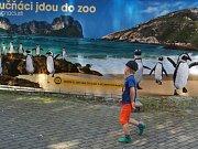 Tučňáci jdou do zoo.