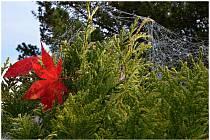 Podzim začíná vybarvovat ústecké zahrady.