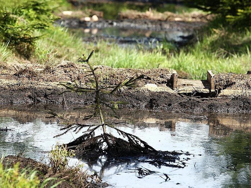 Rašeliniště je zachráněno. A teď jsi na řadě ty, přírodo...