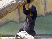Den medových medvědů v ústecké zoo.