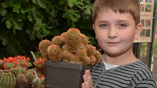 Výstava kaktusů v Ústí nad Labem.
