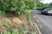 Nedaleko Habrovického rybníka zahrádkáři vozí odpad hned za hlavní silnici. Je zde posekaná tráva nebo zbytky květin. Hromada nepříjemně zapáchá.