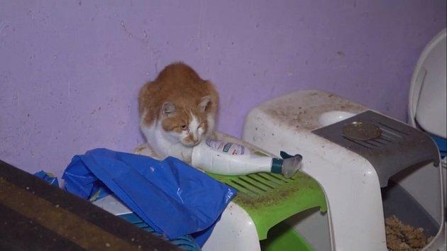 Celkem 16 mrtvých a 22 živých koček našli policisté zavřené vbytě vZolově ulici