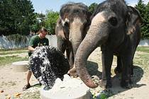 Ústečtí sloni