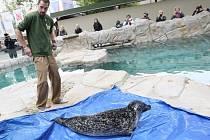 Tuleni mají nový bazén i kamarádku.
