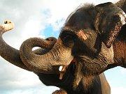 Zoo Ústí nad Labem - ilustrační foto. Slon indický