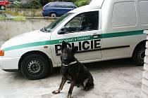 Policejní pes Tiár zachránil lidský život.