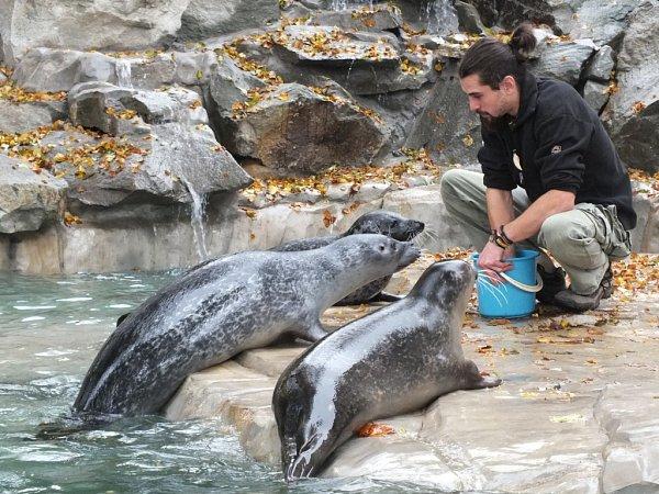 Tuleního samce Juniora musela (uprostřed) ústecká zoo utratit.