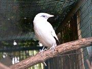 Ústecká zoo poprvé odchovala vzácné majny.