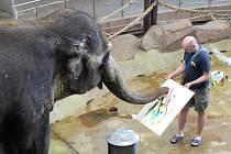 Slonice Delhi v ústecké zoo.