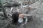 Letos zatím u nás ještě houby moc nerostou, tak alespoň snímek z loňska z lesů nad Deštnicí, napsala do redakce Eva Seemannová ze Žatce