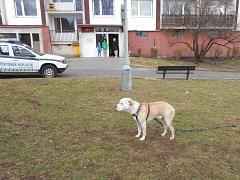 Na pomoc zmatenému muži se psem vyrazili ústečtí strážníci.