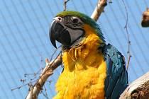 Ústecká zoo - Ara Ararauna