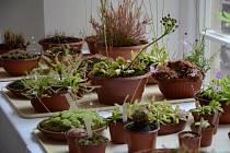 Rostliny. Ilustrační snímek.