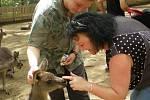 Monika Králová z Ústí nad Labem poslala foto z Koala Parku v australském Sydney.