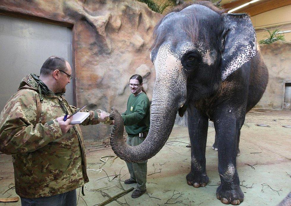 Pohodovou teplotu mají v pavilonu slonic Kaly a Delhy ošetřovatelé Jan Javůrek a Petr Kiebel.