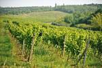 Vinice v Chrámcích vznikly na rekultivavém území.