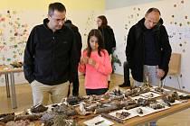 Výstava hub v ústeckém muzeu