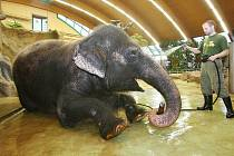 Bude chov slonů v Ústí pokračovat? To není jasné. Zoo totiž na podobnou investici zatím chybí peníze. Pokud chov skončí, Kala a Delhi tu pouze dožijí a tím skončí jedna slavná éra ústeckého chovu zvířat.
