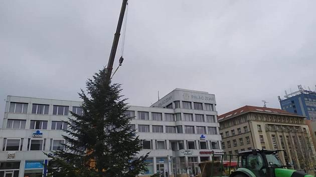 Vánoční jedle zdobí ústecká náměstí.