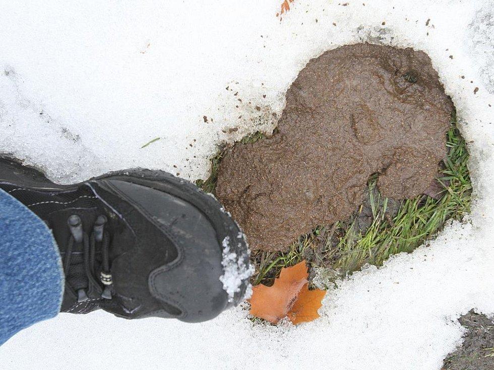 Ústecké parky a sídliště jsou nyní plné psích exkrementů. Ty odkryl zejména tající sníh.