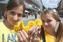 Žluté kvítky měsíčku lékařského nabízeli dobrovolníci i v severočeských městech.