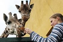 Zoo láká na zvířata i zajímavý program.
