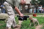 Kameraman a biolog Jiří Bálek povypráví o natáčení se zvířaty.