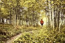 Jedním z důvodů zorganizování závodu Jizerská 50 RUN je podle pořadatelů snaha ukázat účastníkům tradičního lednového klání na běžkách hory v době, kdy se podzimně vybarvují...