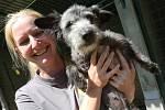 CENTRUM PRO ZVÍŘATA V NOUZI  při ústecké zoologické zahradě se aktuálně stará o 55 nejrůznějších plemen psů.
