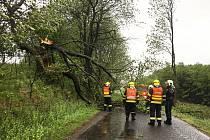 Hasiči z Malečova a Velkého Března vyjeli ke zlomenému stromu v Homoli u Panny