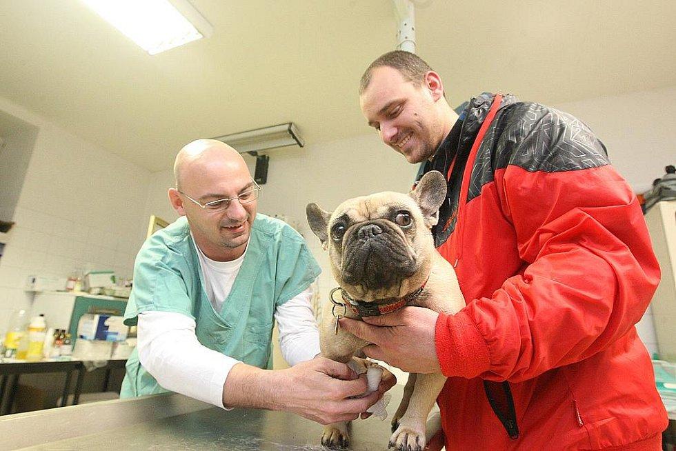 """Jako veterinární asistent jsem během jednoho večera pomáhal """"léčit"""" nemocné čtyřnohé pacienty v litvínovské veterinární ambulanci, kam v průběhu jedné hodiny přišla desítka majitelů psů, koček i králíků."""