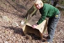 Ježky, kteří našli zimní azyl v ústecké zoo, vypustili v zahradě do volné přírody.