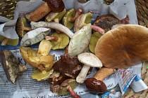 Našli jste houby? Pošlete fotografie na e-mail ustecky@denik.cz.