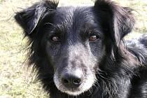 Basty, útulkový pes, se stal oblíbencem porotce soutěže Ondřeje Hejmy.
