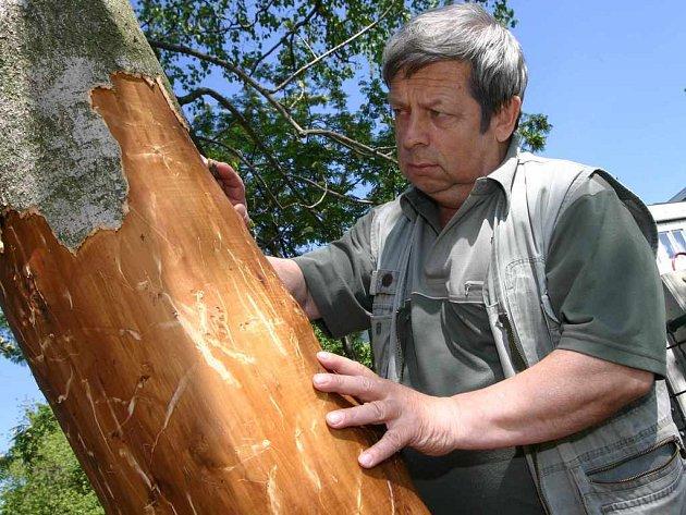 Soudní znalec z oboru přírody a lesního hospodářství Marek Hanuš u poničeného stromu
