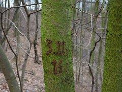 Na bruslení to moc nevypadá, ale mráz snad ještě přijde. Najdou se ale i vandalové, kteří na kopci ničí stromy nebo preparují měď z kabelů.