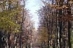 Kilometrová alej v Krásném Dvoře
