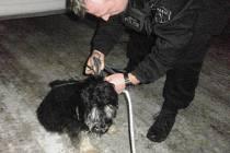 Pes ohrožoval dopravu v ulici Sociální péče.
