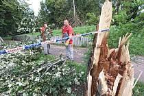 Ústí nad Labem se pondělní bouře nevyhnula, popadalo několik desítek stromů po celém městě. Probíhá odklízení a likvidace dřeva v parku v Klíšské ulici.