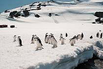 Tučňáci a čínské refugio na ostrově Nelson.