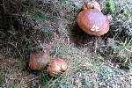 Na houbách s rodiči, úlovky z 19. srpna v Krušných horách.