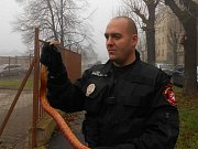 Ústečtí strážníci pomáhají také zvířatům v nouzi.