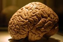 Mozek je na vrcholu své výkonnosti mezi 16. až 23. rokem vašeho života. Pak stárne.