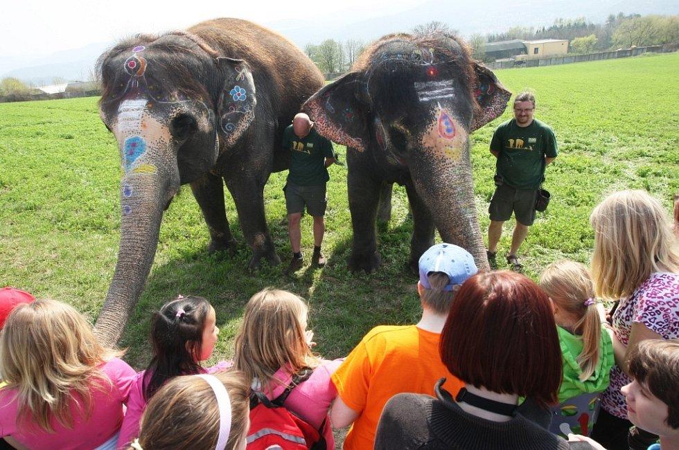 V indických barvách si vyšly na procházku slonice ústecké zoo. V rámci školní akce o Barmě je nakrmili žáci školy Anežky České.